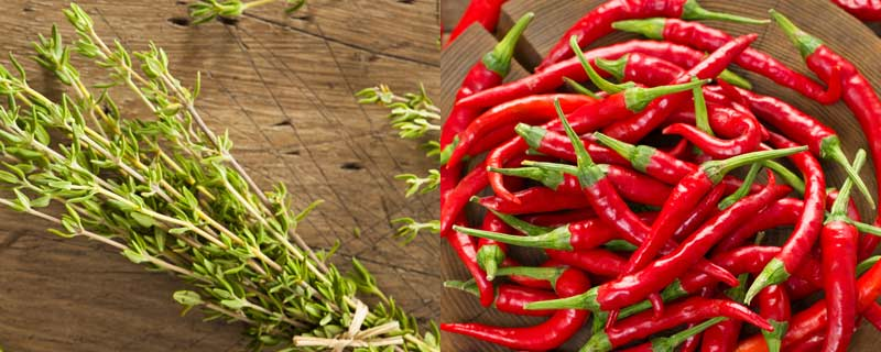 chilis-and-thyme
