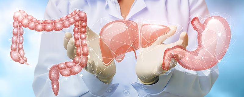 digestive-organs