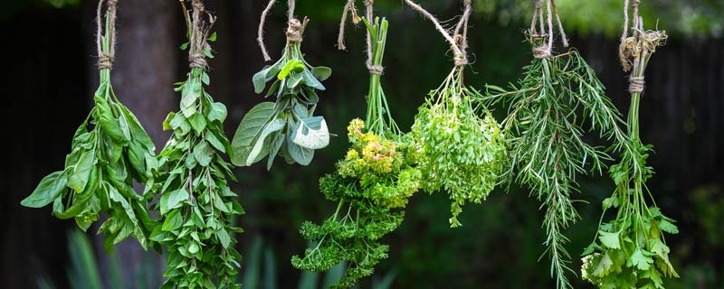hanging-herbs