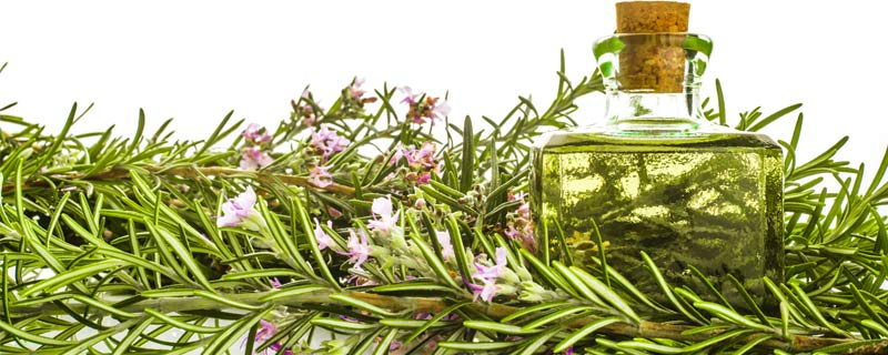 This One Herb May Promote Longevity