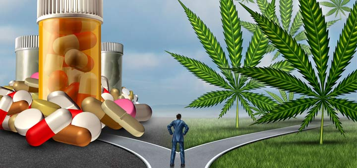 Could Cannabis Oil Be The Cure For Cancer?