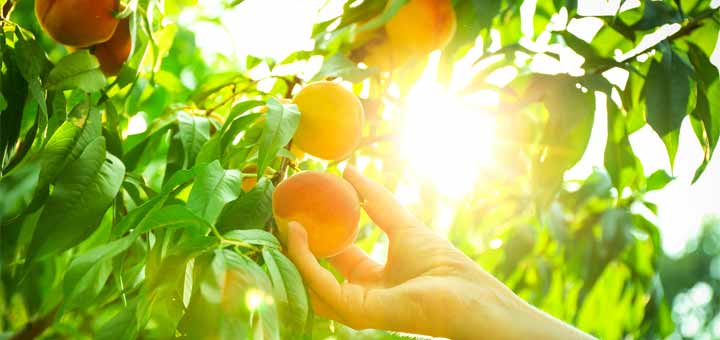 Reduce Stress & Cancer Risk By Eating This Summer Fruit