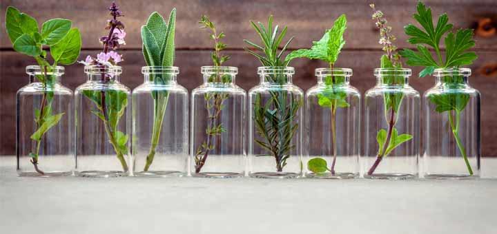 7 Antiviral Herbs That Enhance Your Immune System