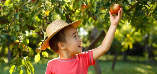 All About Apples: A Guide To The Best Fall Varieties