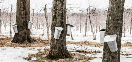 Ways To Use Maple Syrup On National Maple Syrup Day