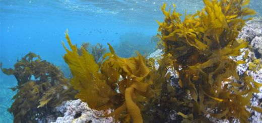Why Seaweed Deserves to Be the Next Superfood