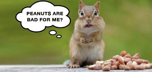 Peanuts May Be Hazardous To Your Health
