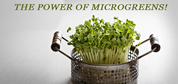 The Amazing Health Benefits Of Microgreens