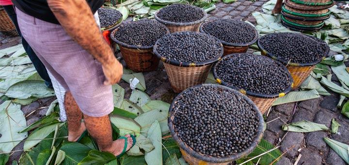 5 Health Benefits Of Acai Berries
