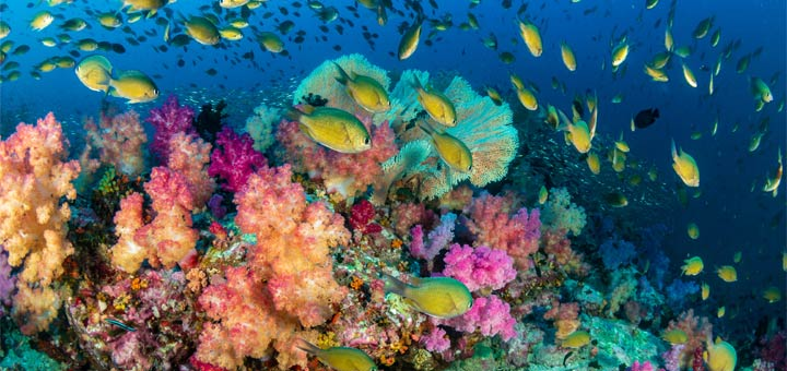 Dive Into Conservation For World Reef Day