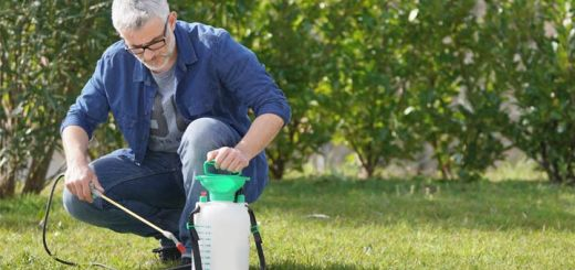 It May Shock You But These DIY Weed Killers Really Work