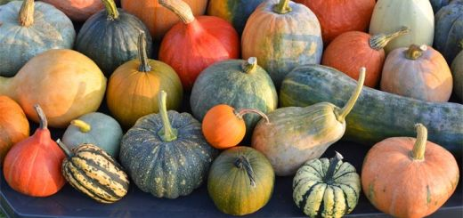 The 5 Benefits Of Winter Squash