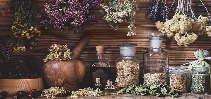 3 Powerful Antiviral Herbs That Boost Immune Health