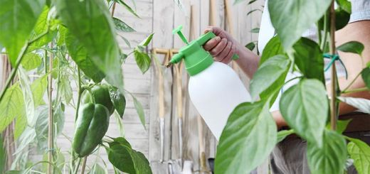 Homemade Chemical Free Pest Control Spray For Your Garden