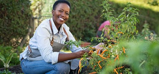 Black-Owned Farms & Food Gardens You Can Support Right Now
