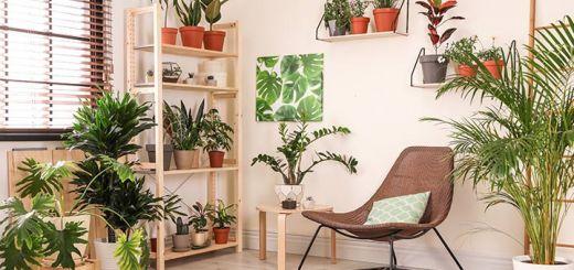 5 Indoor Plants That Will Help You Breathe Better