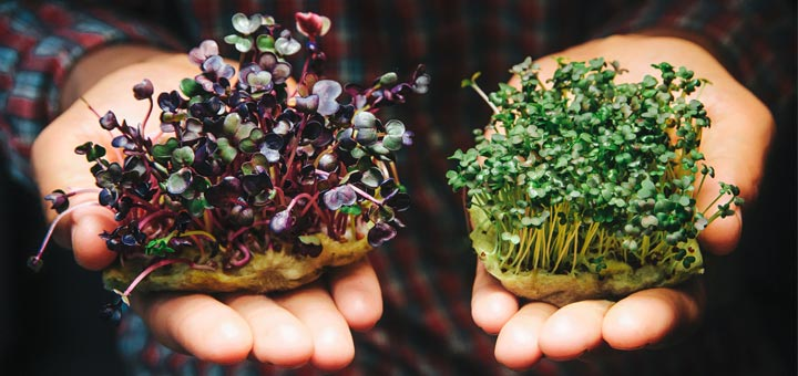 Sprout Your Way To A Healthier Body: The Benefits Of Sprouts