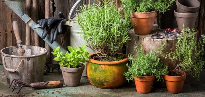 6 Medicinal Herbs You Can Grow In A Pot