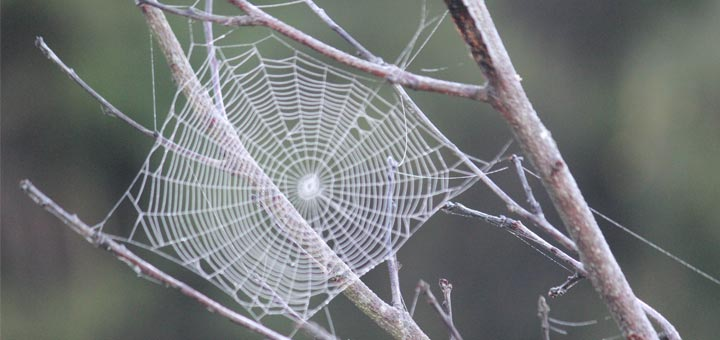 How To Make A DIY Natural Spider Repellent