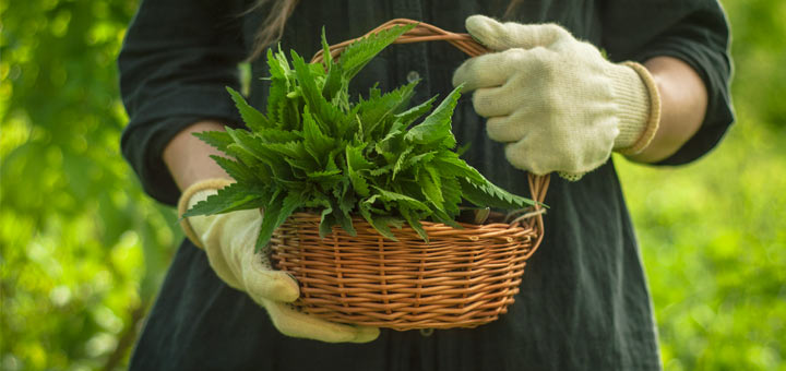 Why Every Woman Needs Nettle For Hormonal Balance
