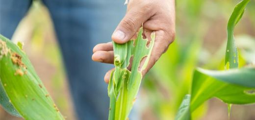 8 Companion Plants That Protect Crops From Pests