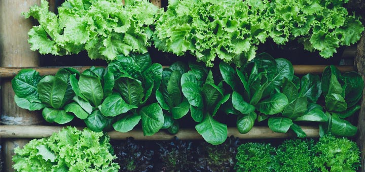 The Top 5 Health Benefits Of Leafy Greens